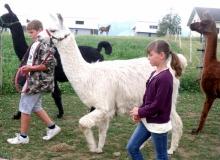 Juillet 2016 - Lamas-alpagas