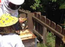 Juillet 2017 - Graines d'apiculteurs